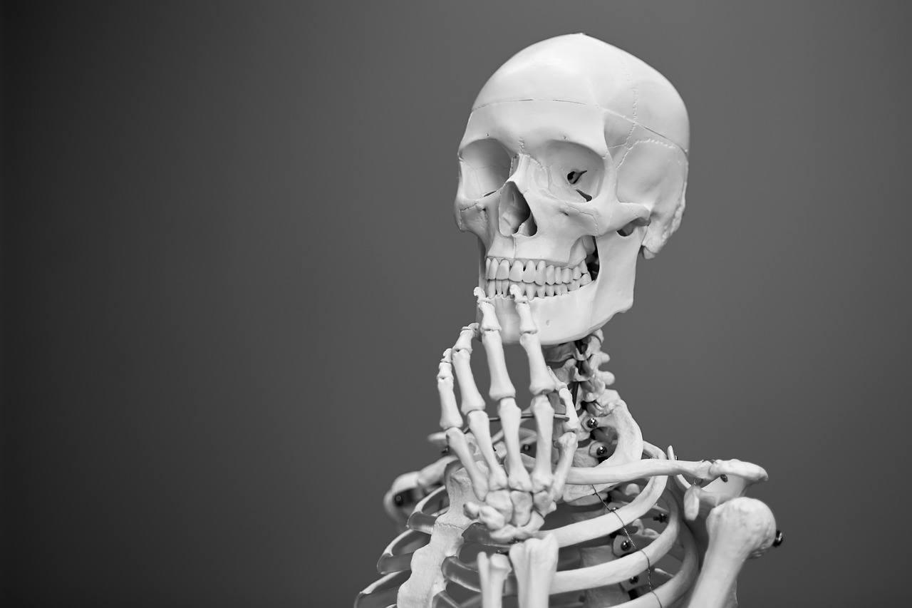 Anatomiske modeller er ret så realistiske
